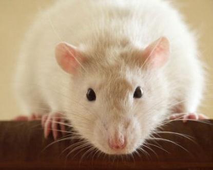 Mäuse In Wohnung Und Haus Bekämpfen Wohnen Bauen Leben In